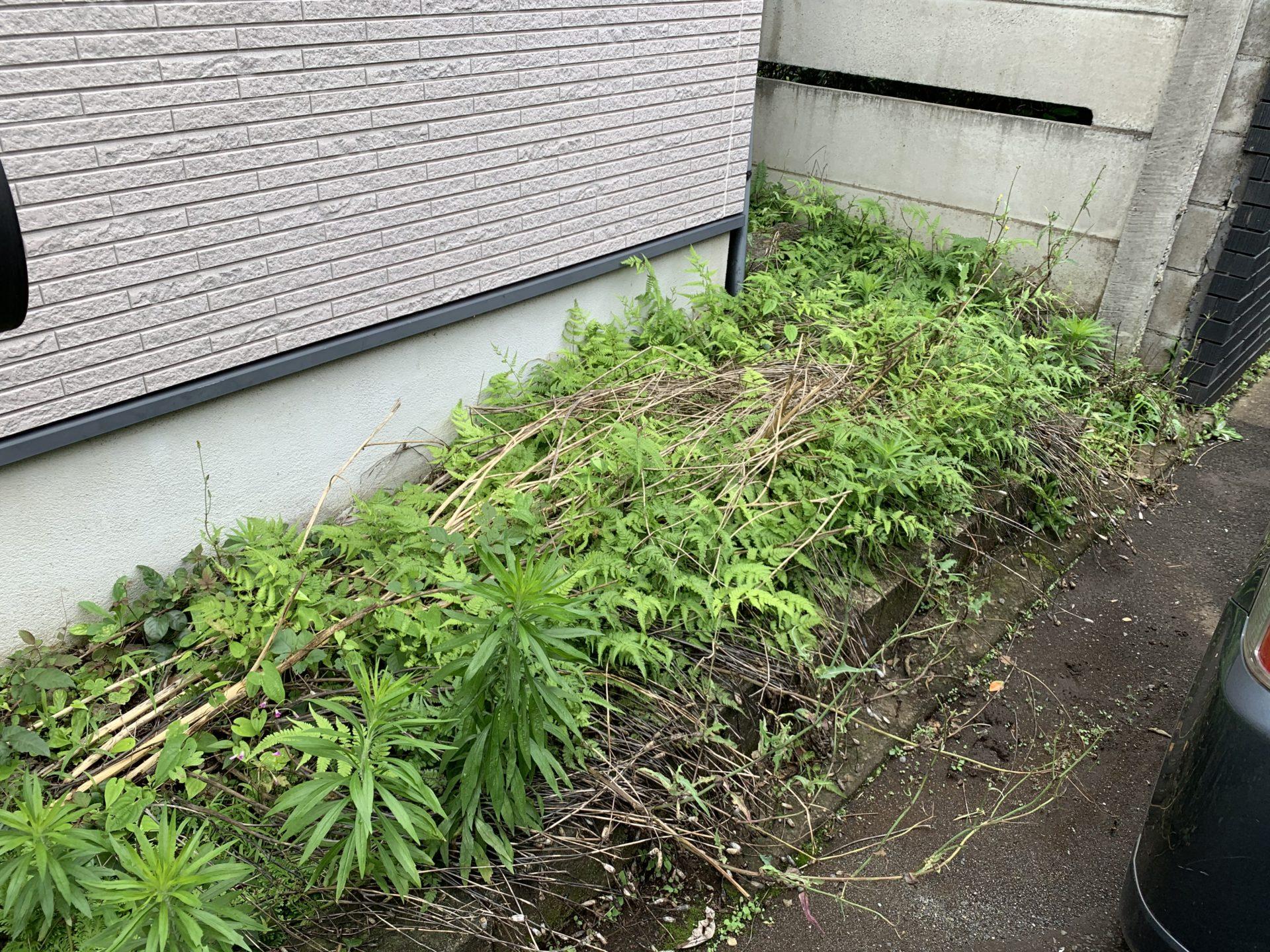 雑草が生える玄関脇スペース
